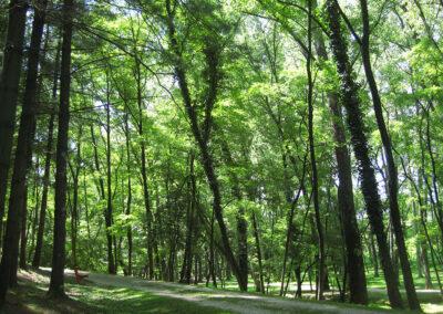 Anelli nel verde Cividale del Friuli